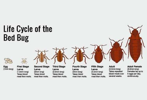 How To Get Rid Of Bed Bugs Easy