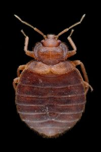 How To Get Rid Of Bed Bugs Travelling