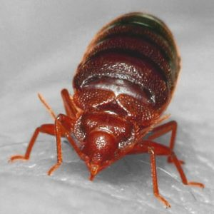 How To Get Rid Of Bed Bugs Using Heat