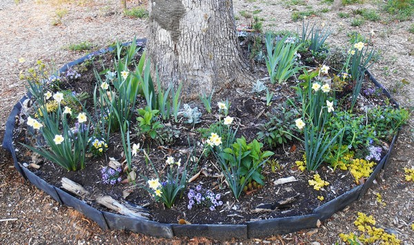 DIY Garden Edging Designs