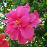 Hibiscus Care