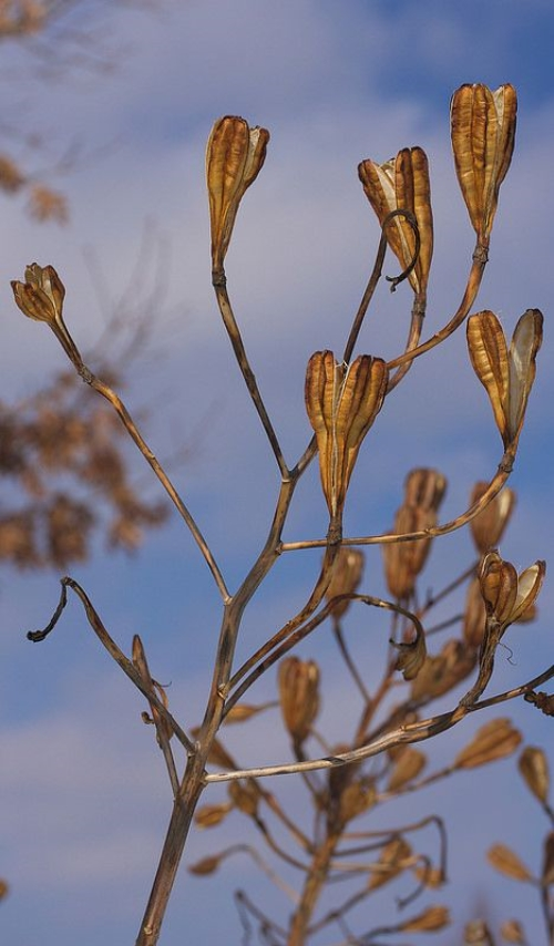 Hibiscus Plant Care In Winter