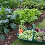 Gardening Vegetables Health Benefits