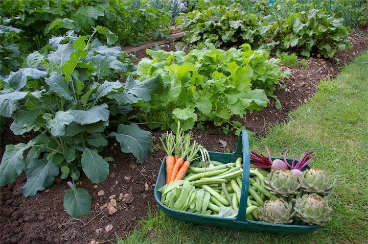 gardening vegetables health benefits