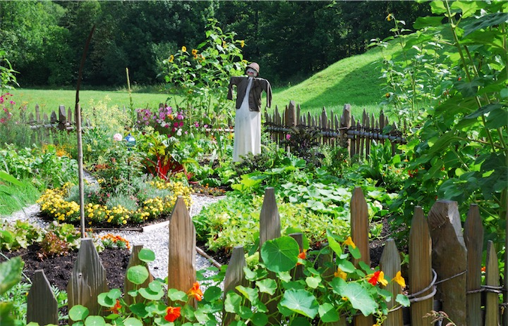 Vegetables Garden Health Benefits
