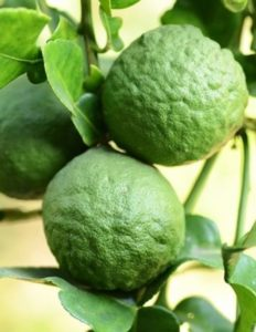Bergamot Essential Oil Edible