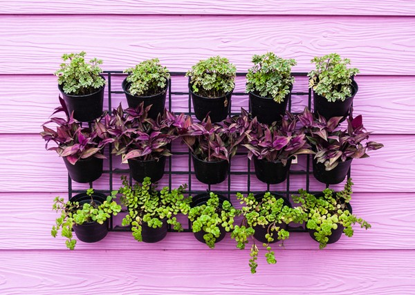 Advantages Of Vertical Gardening