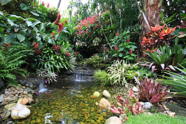 Image result for How to Make a Tropical Garden