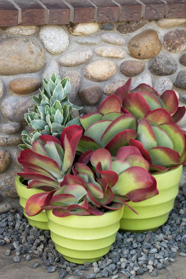 Low Water Succulents