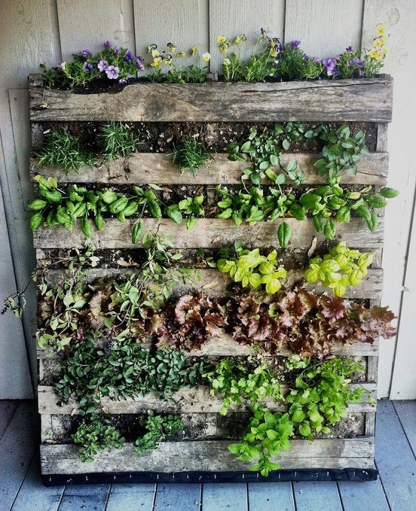 Vertical Gardening Colorado
