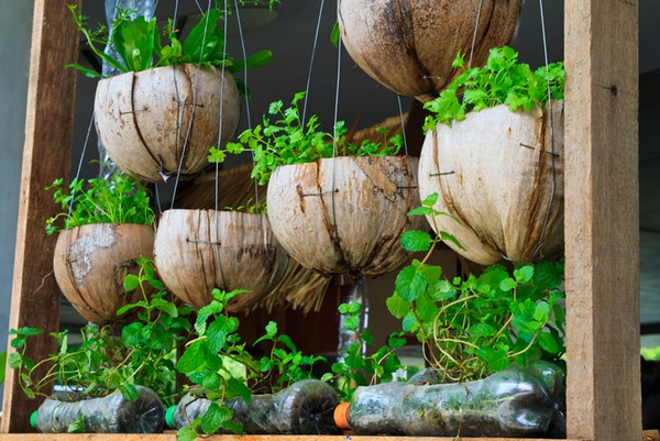 Vertical Gardening Coconut Shells