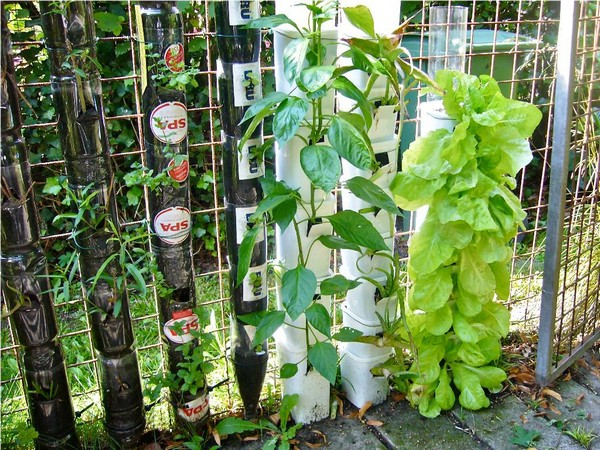 Vertical Vegetable Gardening Systems