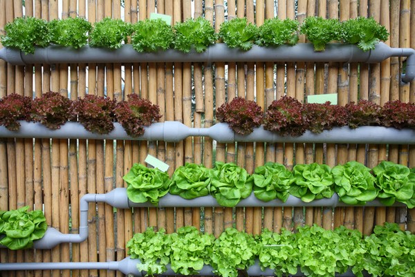 Vertical Vegetable Gardening Pipes