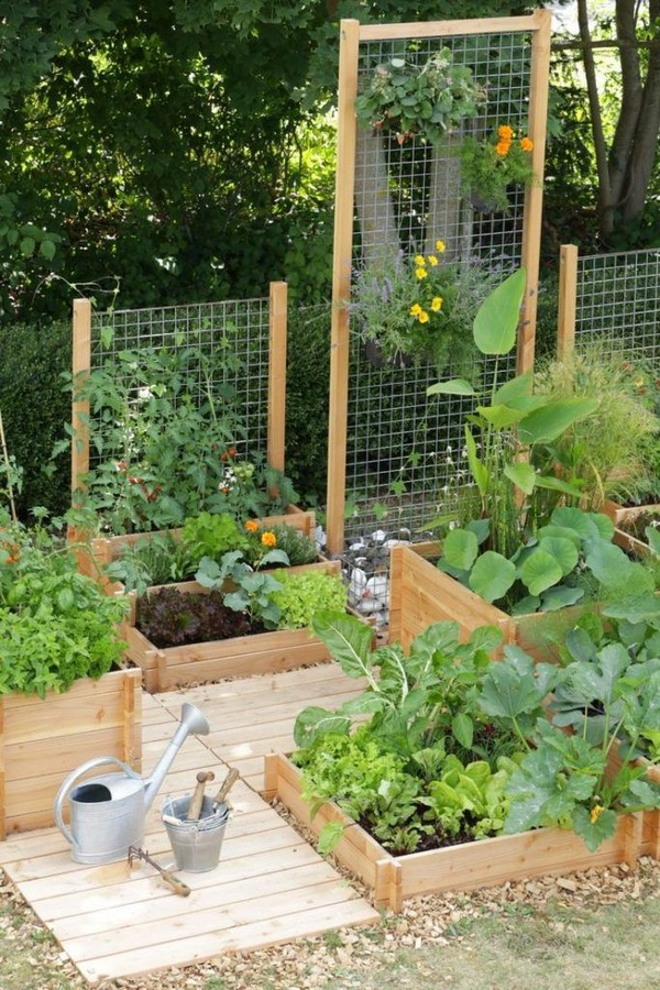 Climbing Plants Backyard Idea
