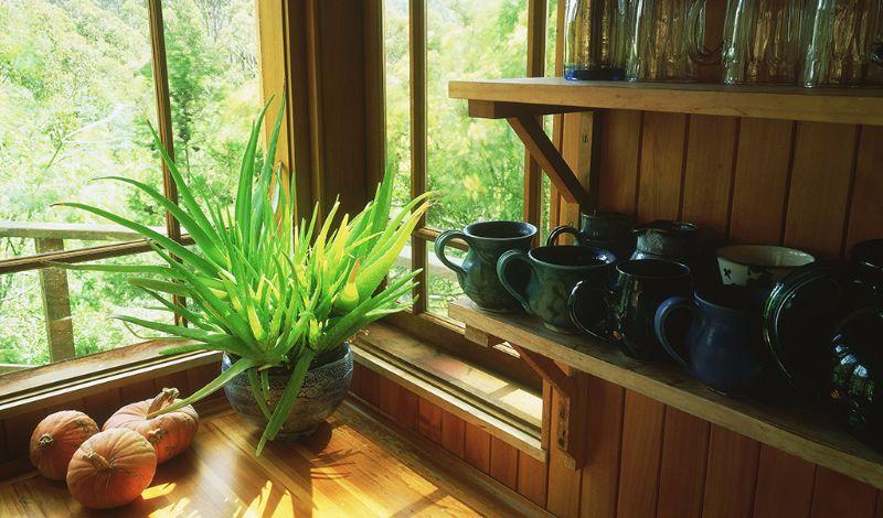aloe veras best indoor plants