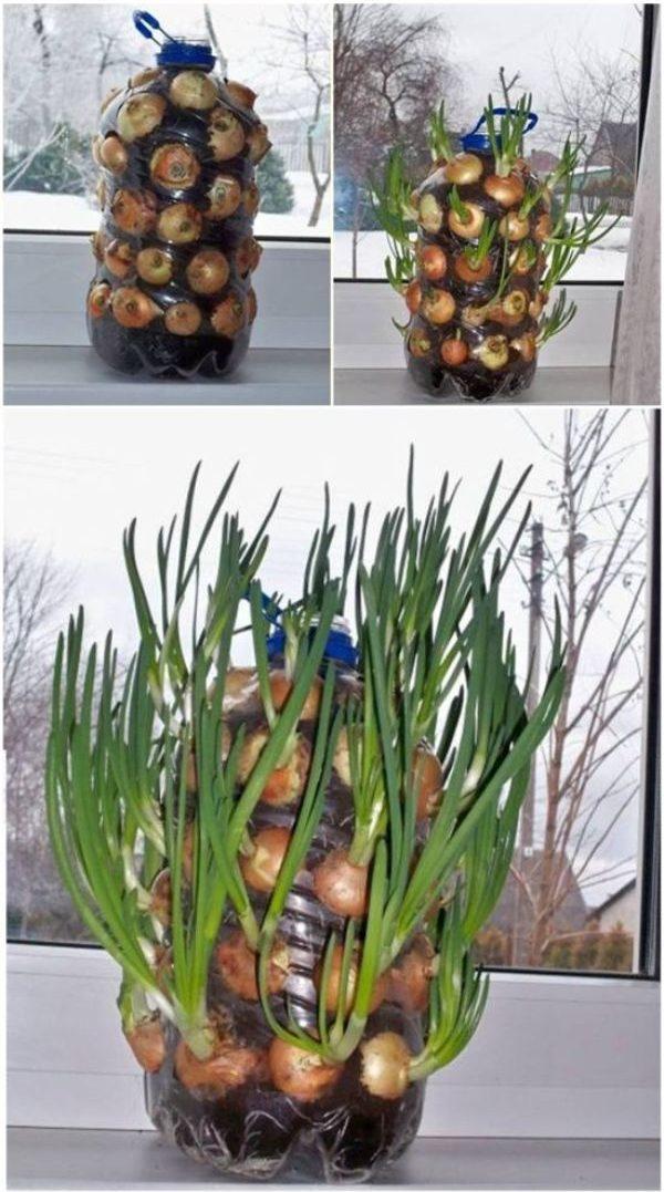 Dublin Indoor Gardening Ideas
