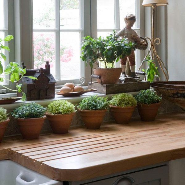 Dublin Indoor Gardening