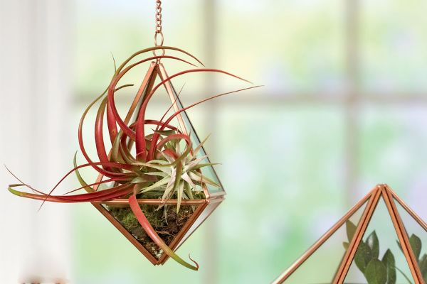 15 Best Air Plants: How To Grow and Care For Them