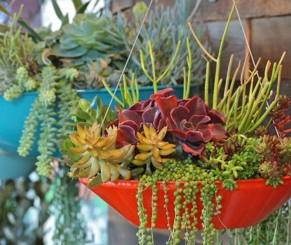 Indoor Gardening Activities
