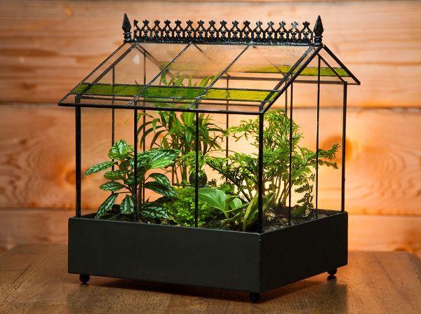 Indoor Gardening Terrarium