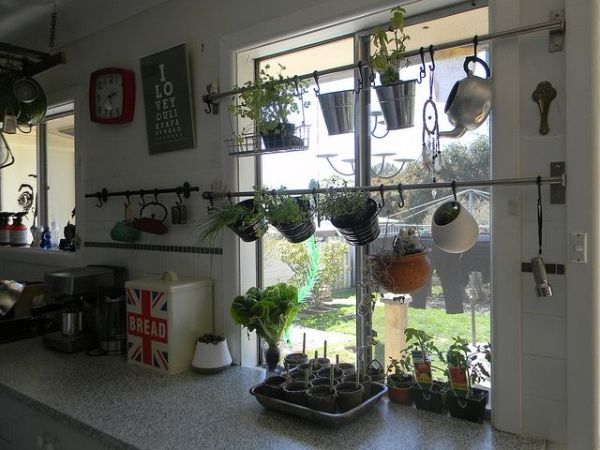 Kitchen Indoor Gardening