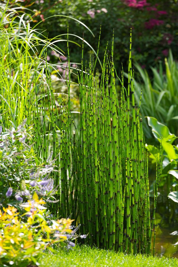 15 Best Water Plants perfect for Indoors and Backyard Ponds