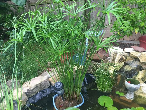 Water Plants For Sale Near Me