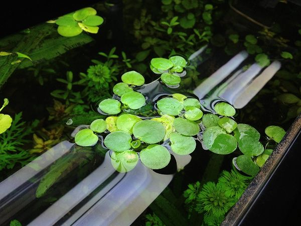 Water Plants Indoor