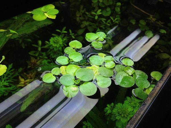 Water Plants Indoor