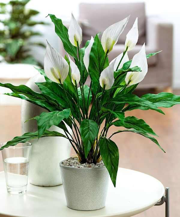 5 Plants For Bedroom