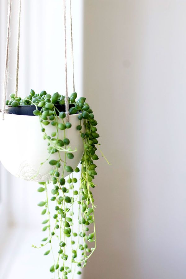 Best Common House Plants For Sale