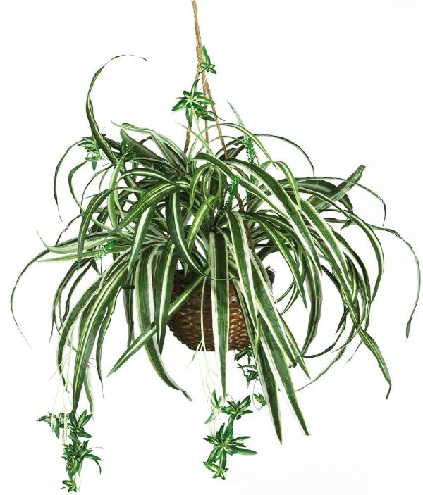 Best Common House Plants
