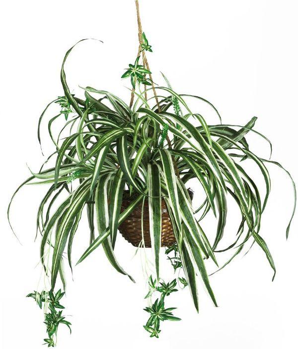 Best Common House Plants