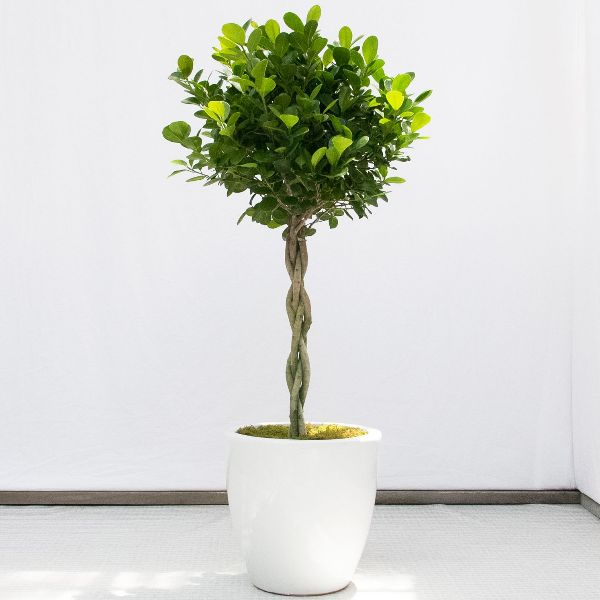 Best House Plants Types Delivery