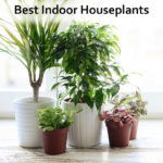 Best Indoor House Plants
