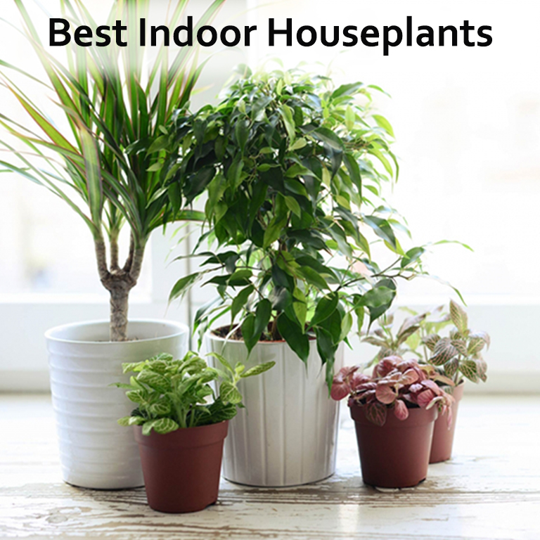 house plants which of these 30 best house plants should you get. Black Bedroom Furniture Sets. Home Design Ideas