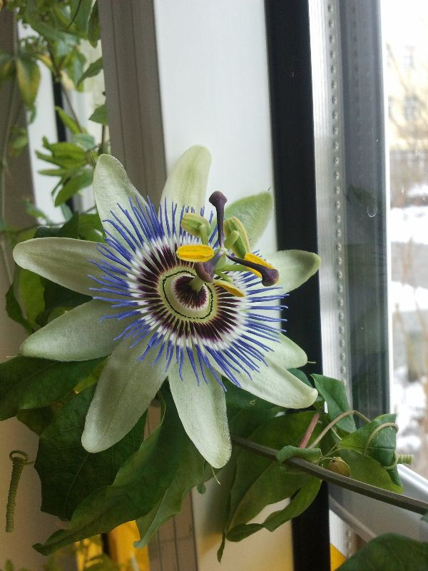 Best Plants For Bedroom Feng Shui