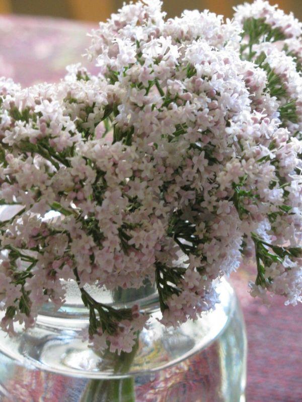 Best Plants For Bedroom Low Light