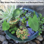 Best Water Plants