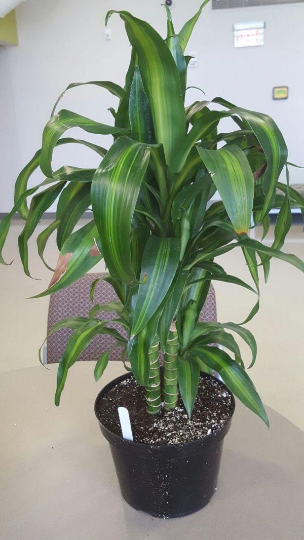 Identifying House Plants