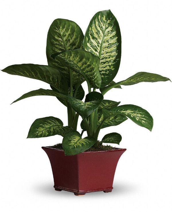 Indoor House Plants For Sale