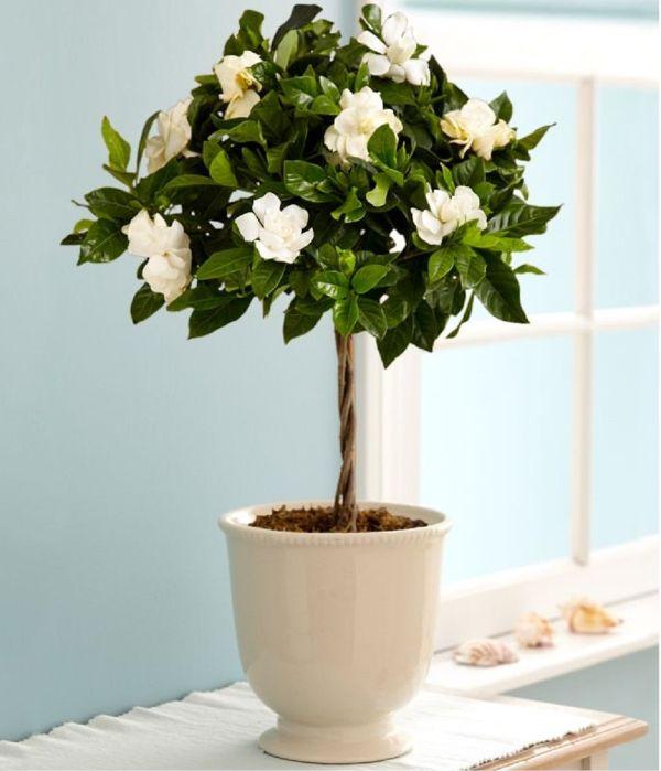 Plants For Bedroom Vastu