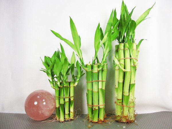 Tropical House Plants