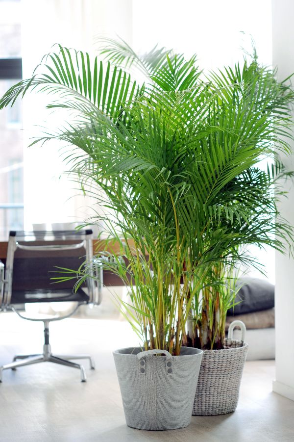 5 Plants For Bedroom NASA