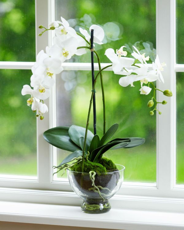 Best Plants Ok For Bedroom