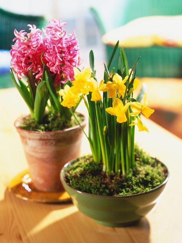 Indoor Gardening Spring