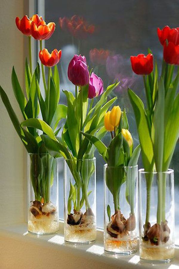 Indoor Gardening Ideas Spring