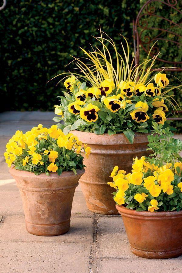 Indoor Gardening Activities Ideas