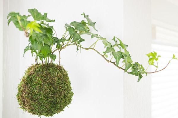 Indoor Gardening Expo 2018 System