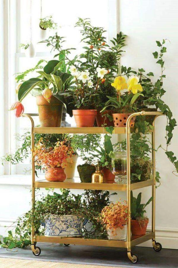 Indoor Gardening Ideas Store